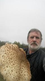 Ale okazy! Grzyby giganty to specjalność tego grzybiarza. Stanisław Kluczkiewicz pochwalił się sową o średnicy ponad 30 cm