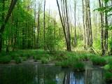 Niezwykłe lubuskie lasy. Musisz je zobaczyć. Są piękne, rozległe i urzekają