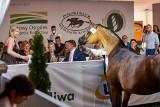 Święto koni arabskich co roku ściągało tłumy. Pandemia odstraszyła widzów