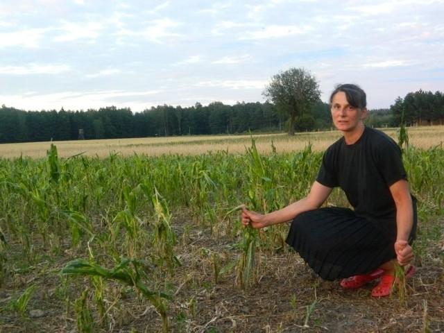 -Nie chodzi o pieniądze – zaznacza Anna Macioł, mieszkanka Rzędowic, której grad zniszczył wszystkie uprawy – Chodzi o zboże, żeby utrzymać moje gospodarstwo – zapewnia.