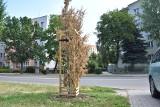 W Tarnowie w zamian za każde wycięte drzewo, sadzone ma być nowe. Tylko dlaczego te młode masowo usychają? [ZDJĘCIA]