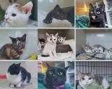 Koty ze schroniska w Poznaniu czekają na adopcję. Zwierzęta potrzebują nowego domu [ZDJĘCIA]