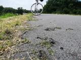 Wiślana Trasa Rowerowa przerasta... trawami. Jest na niej sporo pęknięć
