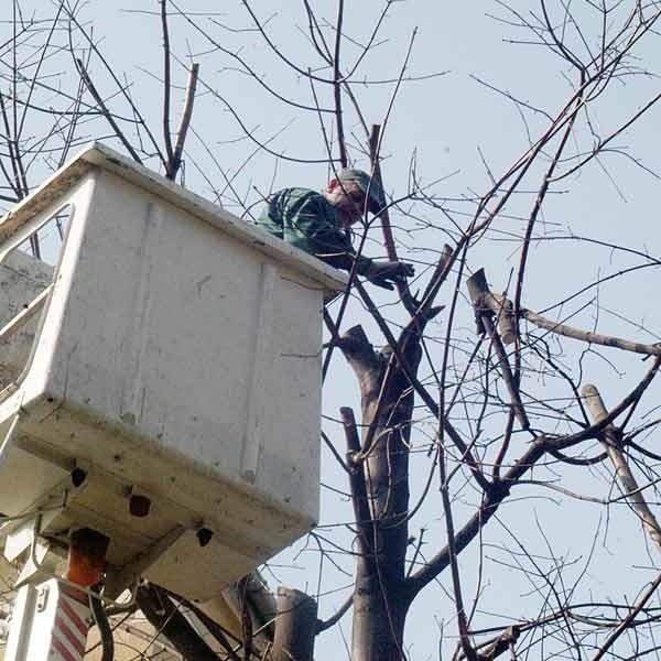 Wczoraj drzewa obcinano w  podwórku jednego z bloków przy ul. Hetmańskiej.