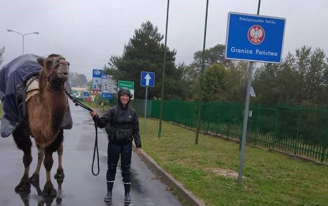 Attika była dziesięcioletnim wielbłądem, który pracował we francuskim cyrku, skąd wykupiła ją Edmée. Francuzka zamierzała dotrzeć ze zwierzęciem do Mongolii, gdzie Attika miała spędzić spokojną starość.