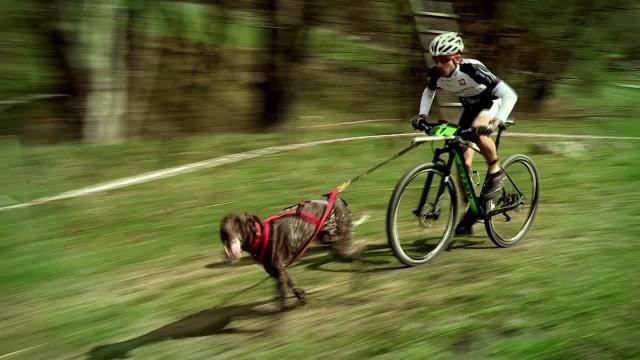 Wyścigi psich zaprzęgów 2016 w Przywidzu