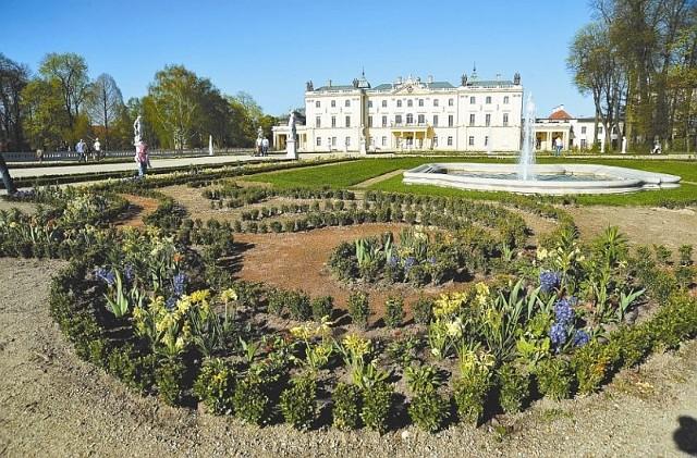 W salonie ogrodowym Pałacu Branickich już rosną kwiaty