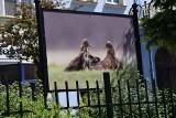 Galeria 13 obrazów to pomysł miasta Nowa Sól na promocję lokalnych artystów