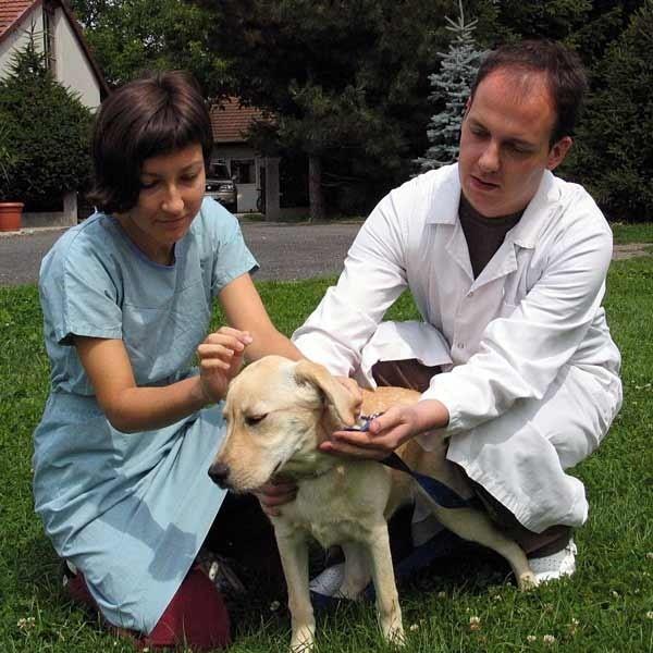 - Dobrze się stało, że pies był na spacerze z opiekunką, bo w porę zauważyła atak żmii. To mu uratowało życie - mówi lek. wet. Radosław Fedaczyński.