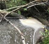 Cuchnący rynsztok zamiast potoku. Oczyszczalnia degraduje Leńczówkę