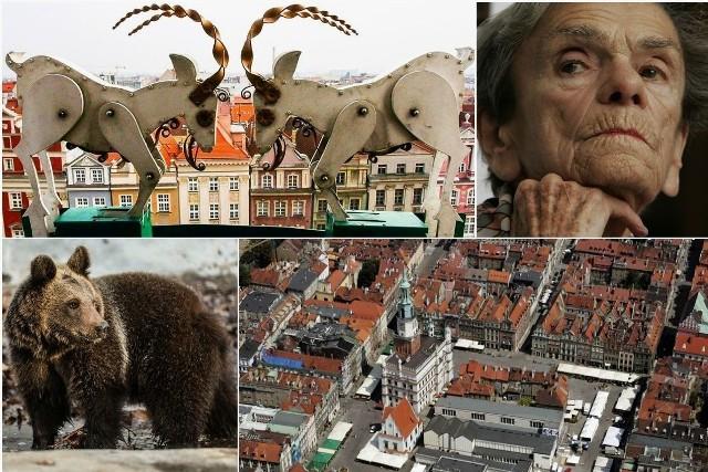 Przygotowaliśmy dla Was zestaw ciekawostek o Poznaniu. Czy wiecie, jak mają na imię poznańskie koziołki? Zastanawialiście się, ile waży Stary Marych? A w którym autobusie ma swój fotel Krystyna Feldman? Odpowiedzi na te oraz inne zaskakujące pytania dotyczące stolicy Wielkopolski znajdziecie w naszej galerii. Sprawdźcie!Przejdź do kolejnego slajdu ----->