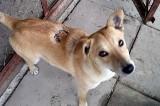 Ktoś oblał kwasem psa Lucky`ego. 500 zł za wskazanie winnego