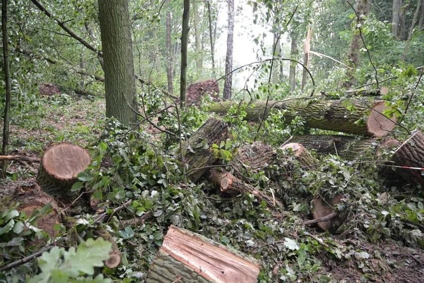 Głównie powalone drzewa i konary usuwają strażacy z powiatu...