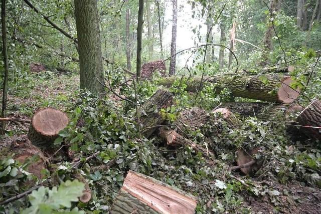 Głównie powalone drzewa i konary usuwają strażacy z powiatu świeckiego po wichurze, jaka w środę (28 lipca 2021) przeszła w okolicy Tlenia i Osia.