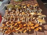 Grzybobranie 2021 w Lubskiem. Wystarczyła chwila, spontaniczny wypad i mamy stół pełen grzybów! Gdzie tak obrodziło?