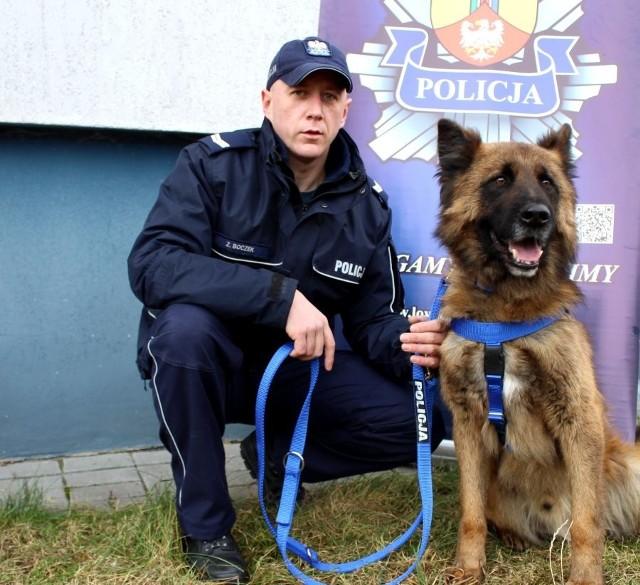 Kozik, pies służący w Komendzie Powiatowej Policji w Łowiczu pomógł odnaleźć zaginionego mężczyznę. 69-letni mieszkaniec powiatu łowickiego został przekazany służbom medycznym