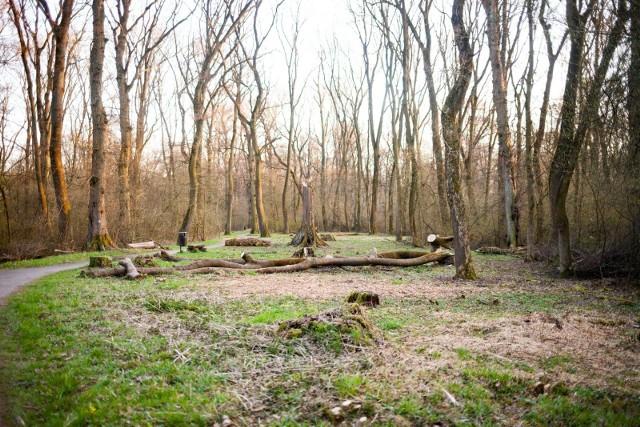 Zakaz wstępu do lasów i parków narodowych potrwa od 3 do 11 kwietnia.