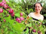 Wielka akcja sadowników: chcą rozdać jabłka ludziom