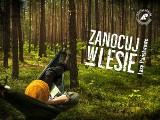 """Rusza akcja """"Zanocuj w lesie"""". W Wielkopolsce będzie można zanocować """"na dziko"""" w 25 nadleśnictwach"""