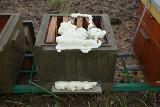 Zniszczyli pasiekę i otruli prawie 420 tysięcy pszczół. Policja szuka świadków