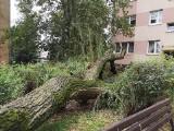 Nawałnica w Częstochowie. Po gwałtownej burzy połamane drzewa, strzaskane auta, zalane piwnice i drogi
