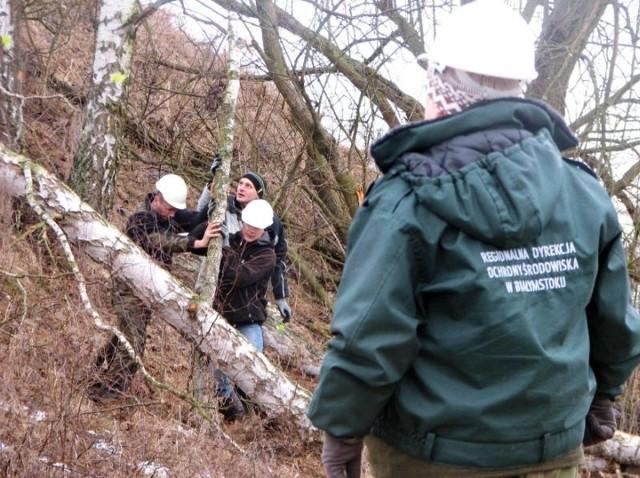 Drwale w sobotę usunęli niemal sto drzew i krzewów w Haćkach