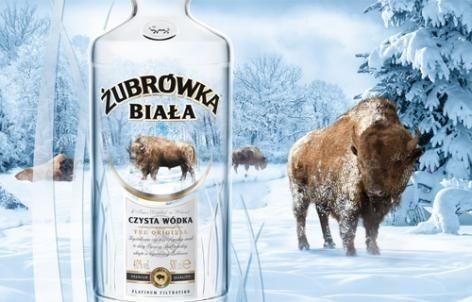"""Godło """"Teraz Polska"""" dla Żubrówki Białej i JeżówkiŻubrówka Biała już w ciągu roku istnienia osiągnęła roczną sprzedaż powyżej 22 mln litrów"""