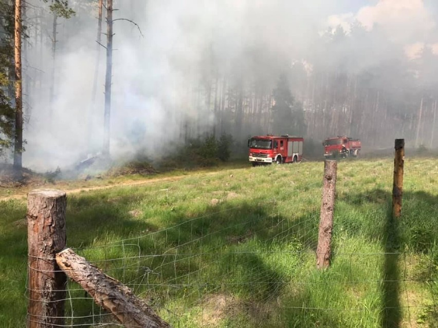 Pożary na terenie powiatu kościerskiego 10.06.2021. W Ludwikowie palił się las, a w Starych Polaszkach drewniany budynek