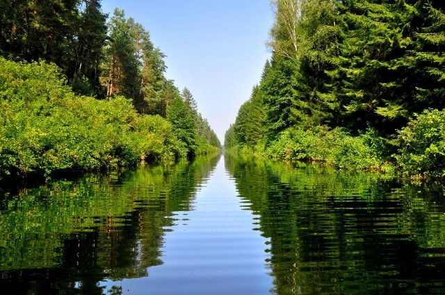 """Kanał AugustowskiW Augustowie zarówno amatorzy, jak i zawodowcy w uprawianiu wędkarstwa czują się jak w raju. Połowić można tu z brzegu lub łodzi, a sezon """"na rybkę"""" trwa cały rok. Zimą, gdy zamarzną jeziora, spróbować można wędkowania podlodowego. Dno kanału w wielu miejscach jest pokryte mułem a niektóre odcinki mają obficie zarośnięte dno. Średnia głębokość waha się od 1,5 do 2,5 m.Występujące ryby:lin, leszcz, okoń, szczupak, węgorz, karaś, miętus pospolity, płoć i ukleja."""