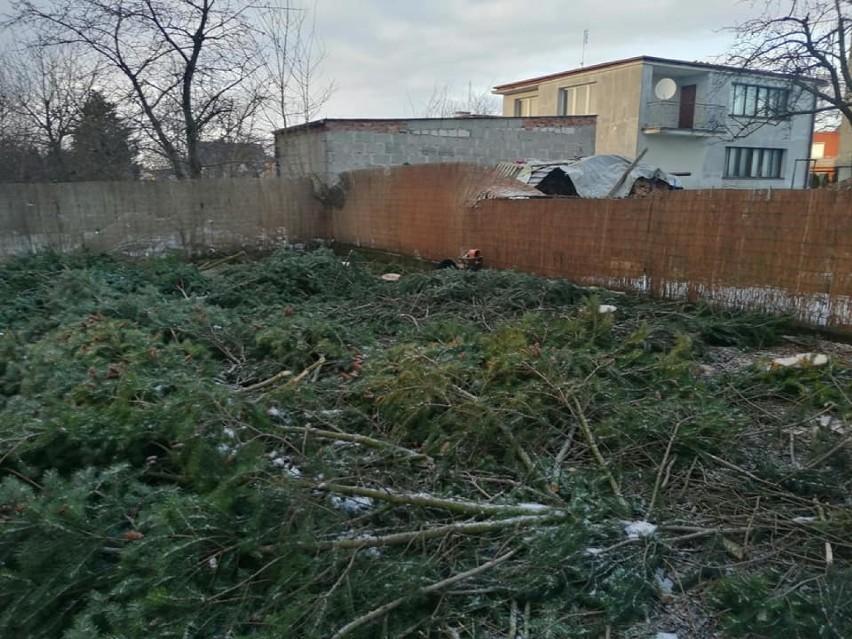 Nieznany sprawca nielegalnie wyciął piękne drzewa na cudzej posesji w Żukowie. Sprawę bada policja