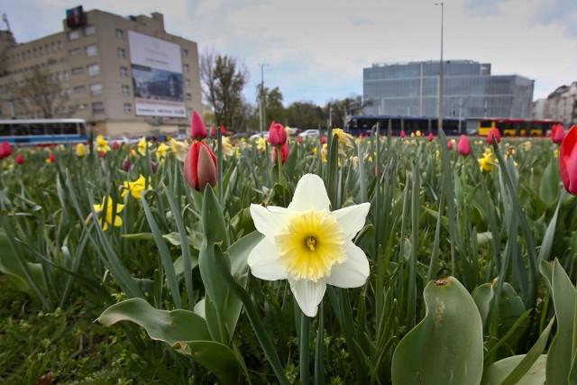 Do Wrocławia zbliża się prawdziwa wiosna z temperaturami w okolicach 20 stopni i dużą ilością słońca