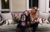 Lady Gaga zapłaci 100 tysięcy dolarów za leczenie postrzelonego przez bandytów opiekuna jej piesków
