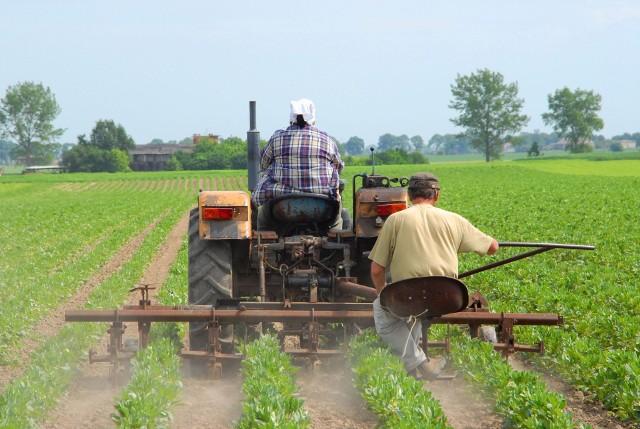 W największych ośrodkach miejskich Polski grunty rolne stanowią nawet 55 proc. powierzchni miasta. Te mniej żyzne mogłyby posłużyć do budowy mieszkań.