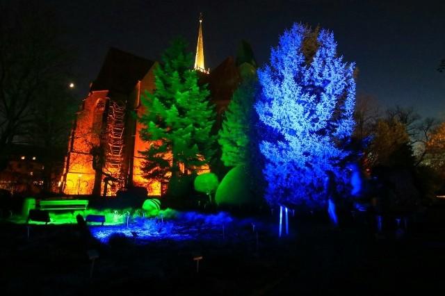 """Pokazy """"Światłogród"""" w Ogrodzie Botanicznym Uniwersytetu Wrocławskiego przy ul. Sienkiewicza"""