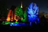 """Bajkowy Ogród Botaniczny. """"Światłogród"""" to spektakularny pokaz nocnej iluminacji [ZDJĘCIA]"""