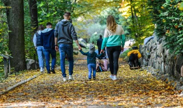 Piękna pogoda sprawiła, że bydgoszczanie wyszli korzystać z uroków złotej polskiej jesieni. Ścieżki i alejki w Myślęcinku zapełniły się spacerowiczami. Zobaczcie fotorelację z Myślęcinka. Zobaczcie urokliwe zdjęcia z jesiennego parku w Myślęcinku >>>Smaki Kujaw i Pomorza sezon 2 odcinek 34