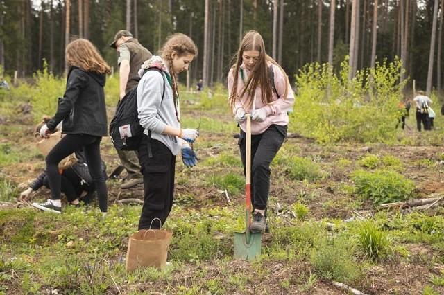 Akcja sadzenia lilijki była wspaniałą przygodą dla harcerzy, która pozostawi żywy ślad dla przyszłych pokoleń i promocją działalności leśników dla dobra lasu. Drzewa sadziło ok. 200 harcerzy zcałego regionu.