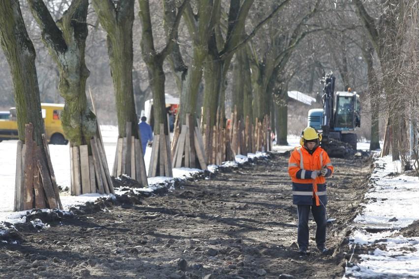 Robotnicy zabezpieczyli deskami cenne, stare drzewa i przystąpili do remontu parkowych alejek