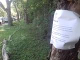 Łódź. Wytną drzewa przy ul. Tymienieckiego. Mają je zastąpić nowe, ale przy ul. Milionowej