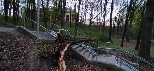 Drzewo runęło na schody, które powstały w 2019 r. w trakcie rewitalizacji parku.