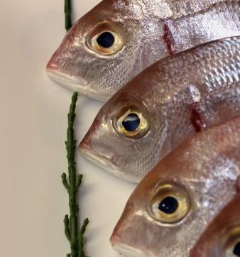 Koszalin. Nowy zakład przetwórstwa rybnego w strefie ekonomicznejDzienna wydajność zakładu to przetwórstwo około 18 ton surowca.