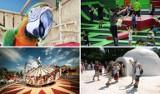 Kolejki górskie, papugi, arktyczne igloo. Czyli wszystkie najlepsze atrakcje dla dzieci w Krakowie i Małopolsce! [CENY, ADRESY] 25.08.21