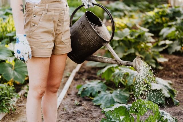 Coraz bardziej przyjemne temperatury i pierwsze wiosenne promienie słońca przynoszą spory ruch na działkach i w ogrodach.