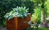Uprawa warzyw w skrzyniach