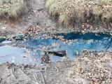 Kraków. Kanał zasilający Wilgę zanieczyszczony? Mieszkańcy alarmują [ZDJĘCIA]