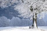 Długoterminowa POGODA na zimę 2020/2021. Jaka będzie zima? Kiedy spadnie śnieg [13.10.2020]