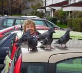 Co robią gołębie na pandzie pani Uli?
