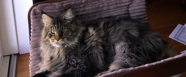Ktoś widział tego kotka w okolicach Wysokiej? Jeśli tak, proszony jest o kontakt pod numerem tel. 606 930 500 lub 692 893 189.