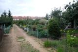 Koronawirus: Samorządowcy chcą zamknięcia ogródków działkowych. Ministerstwo odpowiada, że można na nie jechać w ważnej sprawie