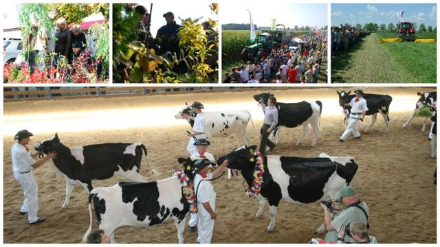 Targi ogrodnicze, Wystawa Zwierząt Hodowlanych, Dzień kukurydzy, Zielona Gala - każda z tych imprez przyciąga tłumy Podlasian